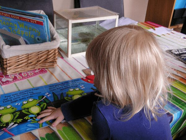 toddler reading a book about frogs in front of a tank holding tadpoles