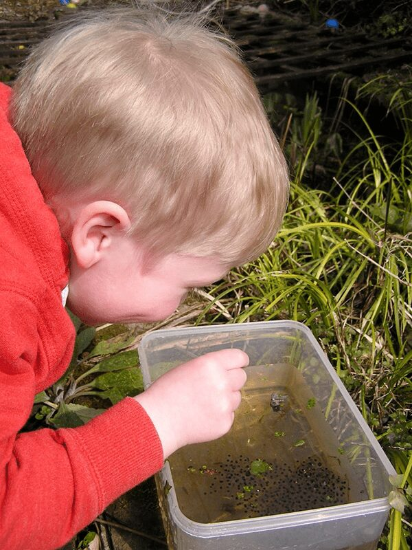 preschooler looking at frog spawn found on a nature walk