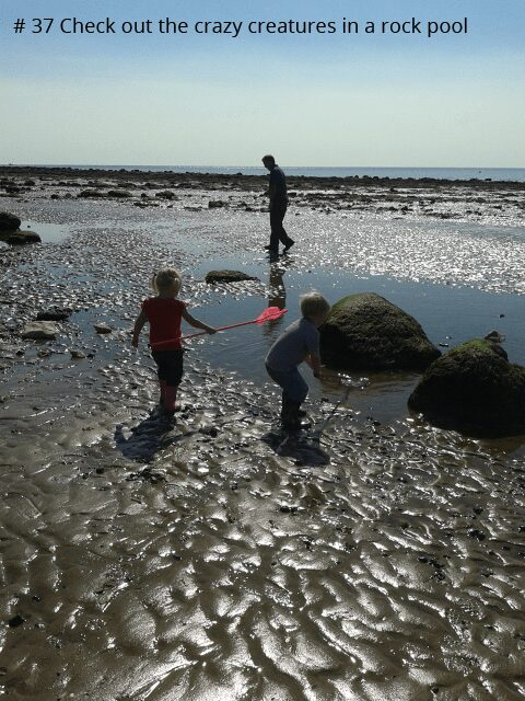 50 things to do before you are 11 and 3/4's number 37 check out the crazy creatures in a rock pool