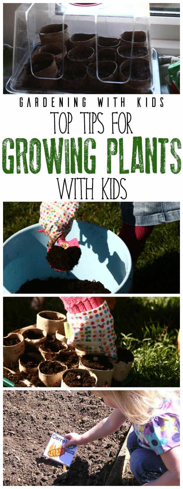Top tips for successfully growing plants from seed with preschoolers and older including how to make cardboard tube compostable pots for growing them in.