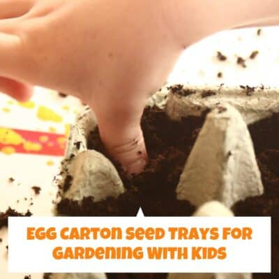 Easy Egg Carton Seed Tray A Simple Garden Project for Kids