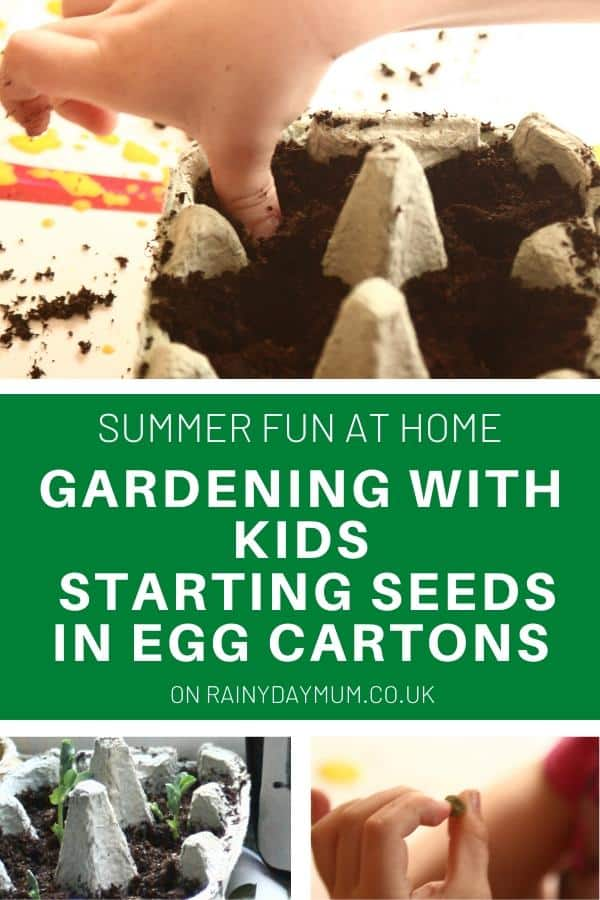 gardening with kids starting seeds in egg cartons
