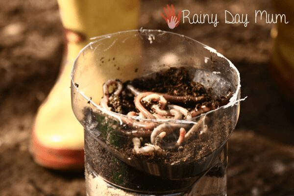 diy wormery from a plastic bottle
