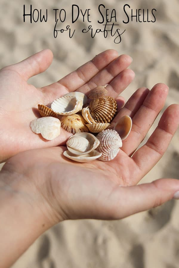Simple Steps on How to dye seashells for Summer Crafts with Kids