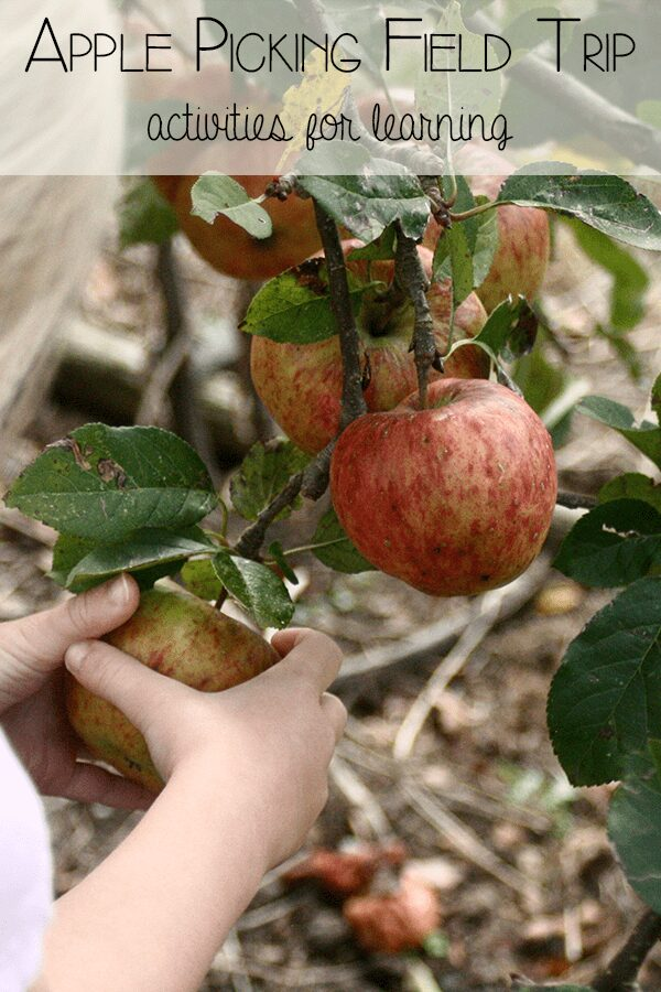 5 Simple learning activities for an Apple Picking Field Trip with a child in early years, covering Numeracy, Sensory, Literacy and Creative Arts