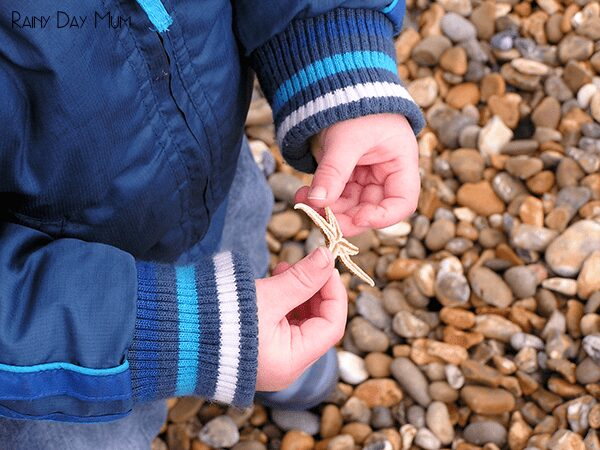 toddler holding a star fish from the strandline