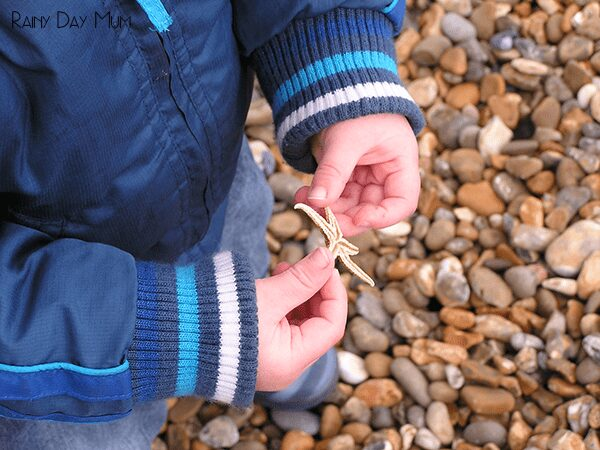 Strandline Exploration - learning outside of the classroom all about natural history, human impact on the world and ocean currents with a walk at the local beach