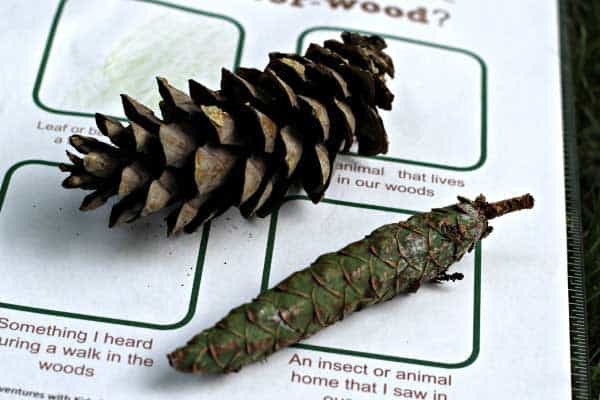 scavenger hunt sheet being completed with pinecones over the top