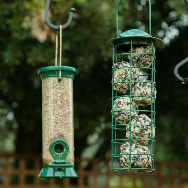 DIY Bird Feed Recipe to Make with Kids