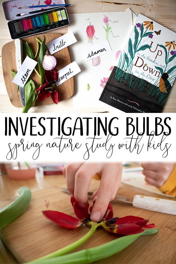 Spring bulb plant investigation and nature study for kids inspired by Up in the Garden down in the dirt