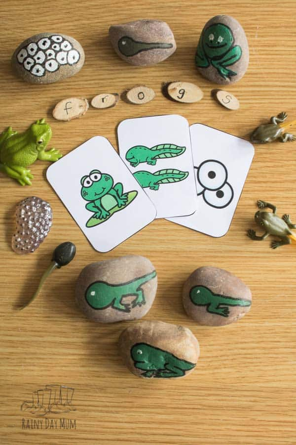 Frog Life Cycle resource flat lay including sequencing cards, spelling logs, lifecycle safariltd toys and DIY story stones