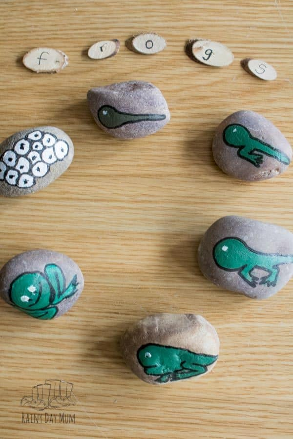 sequencing of the frog life cycle using DIY story stones