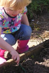toddler gardening growing their own seeds following our top tips for getting them started gardening
