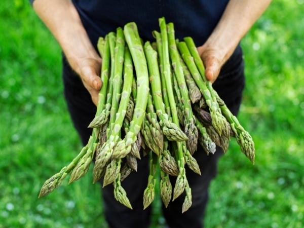 a farmer holding freshly picked and washed asparagus
