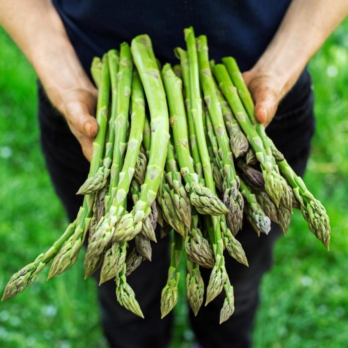 a farm holding asparagus stems in the field that he has picked