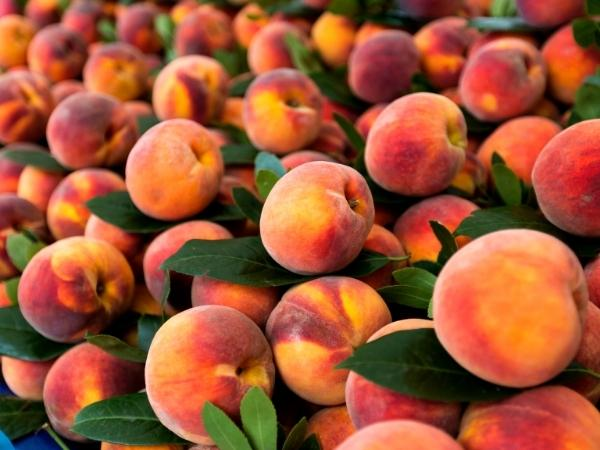 a pile of peaches with leaves on ready to eat in june fresh from the farmers market