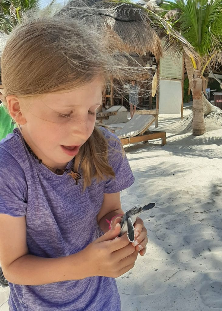 girl wearing a bugwatch holding a green sea turtle hatchling