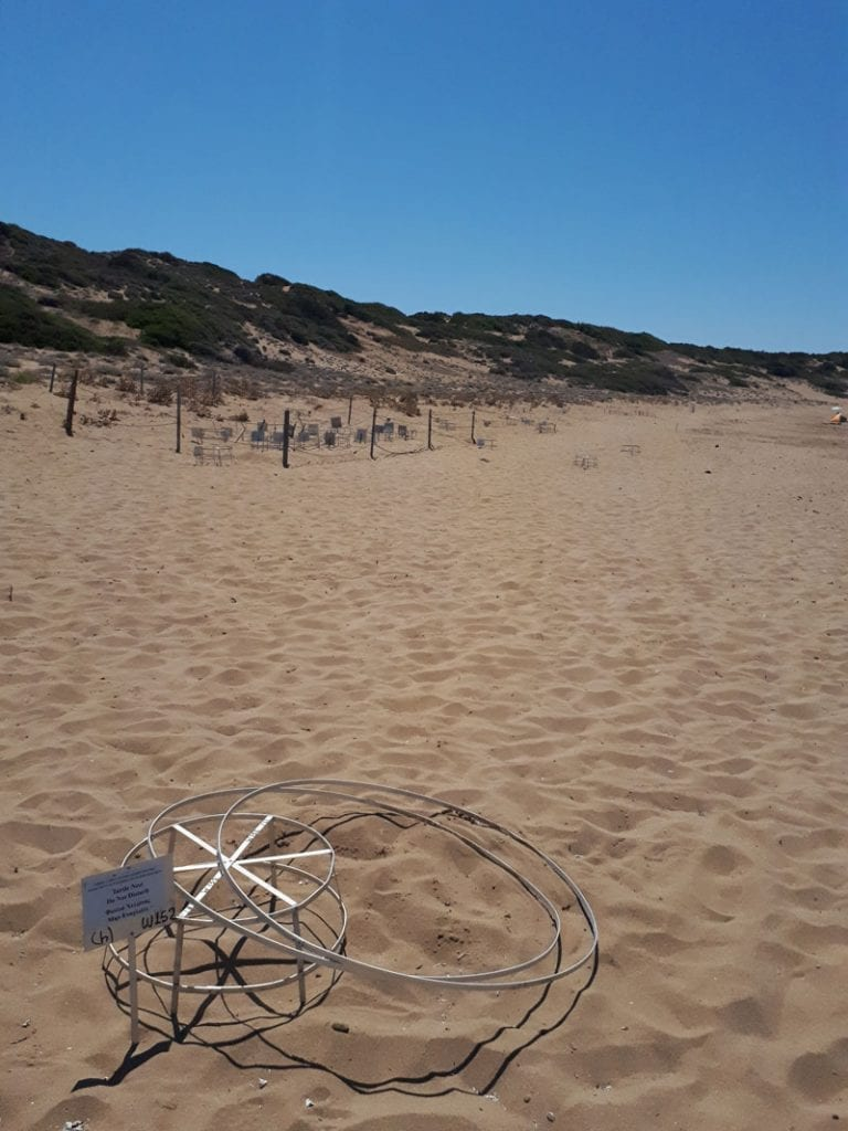 protected sea turtle nest on Lara beach in Cyprus with the hatchery in the background