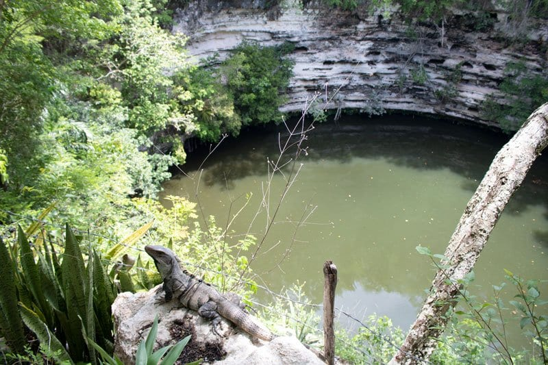 the sacred cenote and the iguanas that are all over Chichen Itza World Heritage site