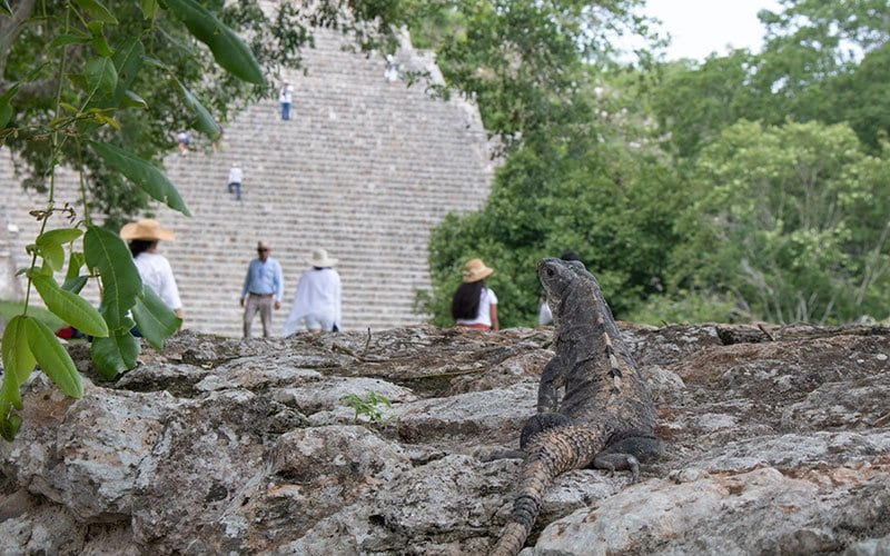 Mayan Pyramids to Climb in Mexico with Kids Uxmal with a Iguana in front